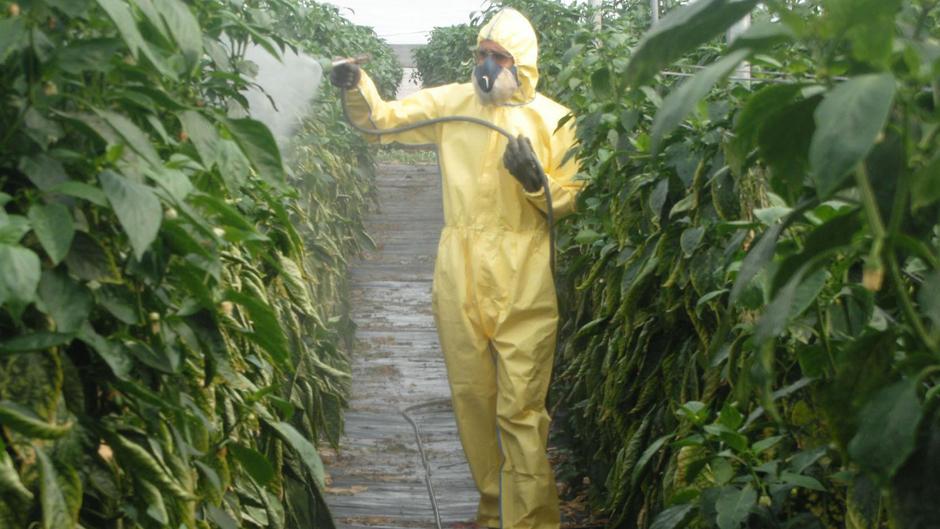 Conozca las ventajas de utilizar control químico de plagas