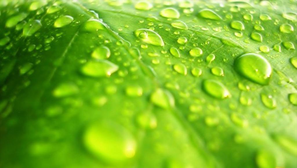 Absorción de agua y nutrientes minerales para las plantas