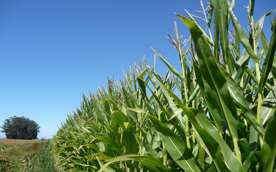 Importancia de los nitratos y fosfatos