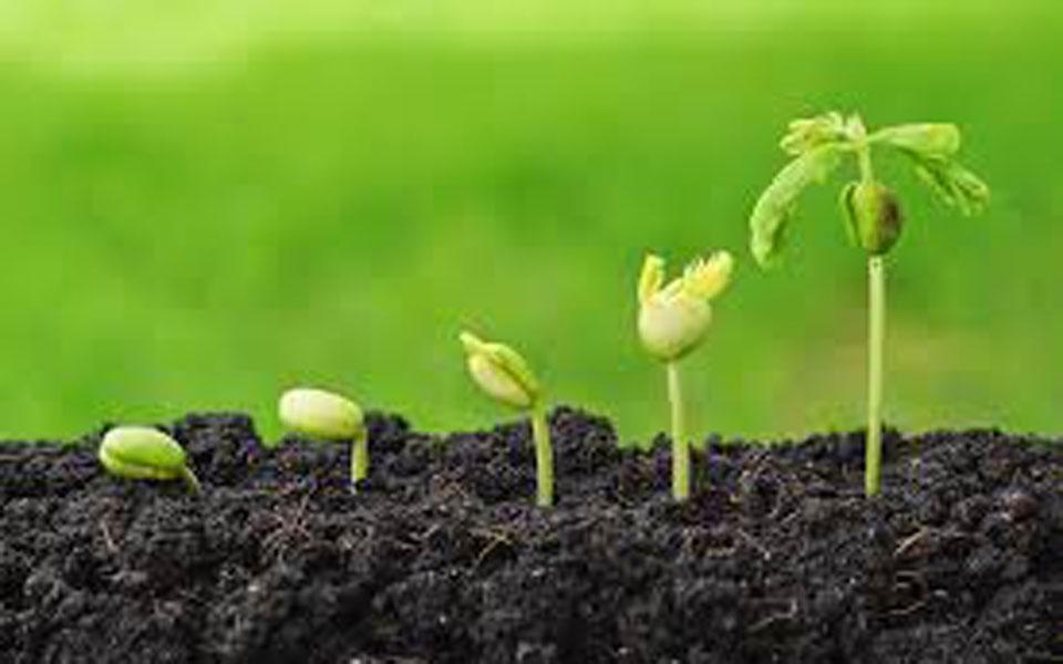 Por qu la sal afecta la germinaci n de las semillas for Tierra suelo wallpaper
