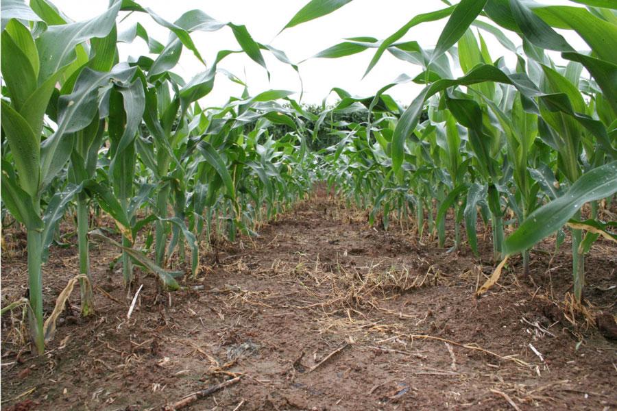 NOTICIAS-2016-Como-funcionan-los-herbicidas-organicos-02