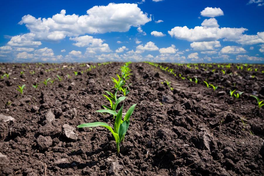 La relación de vacío del suelo