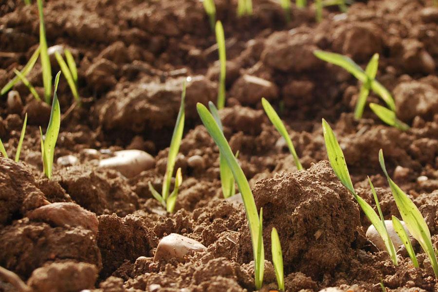 La fertilidad del suelo