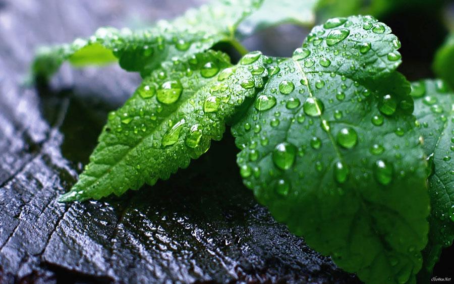 ¿Qué es la fertilización foliar?