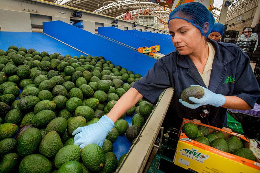 Exportan agricultores mexicanos 73 mdd diarios a USA