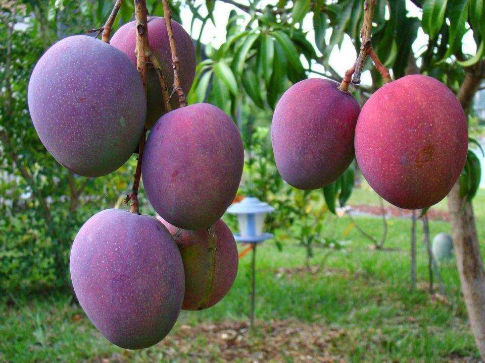 Clasificación de los árboles frutales