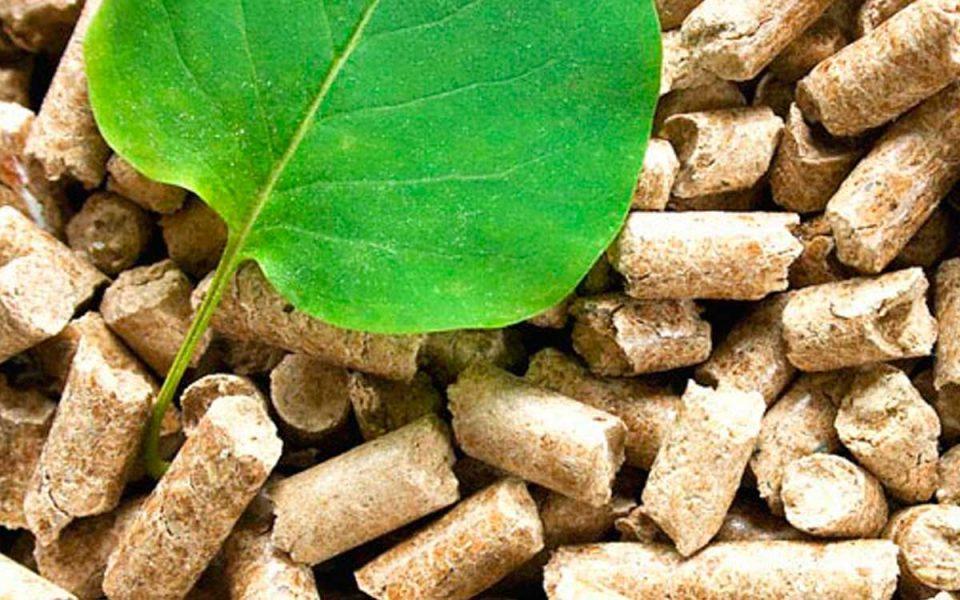 Biomasa, creación ecológica de energía