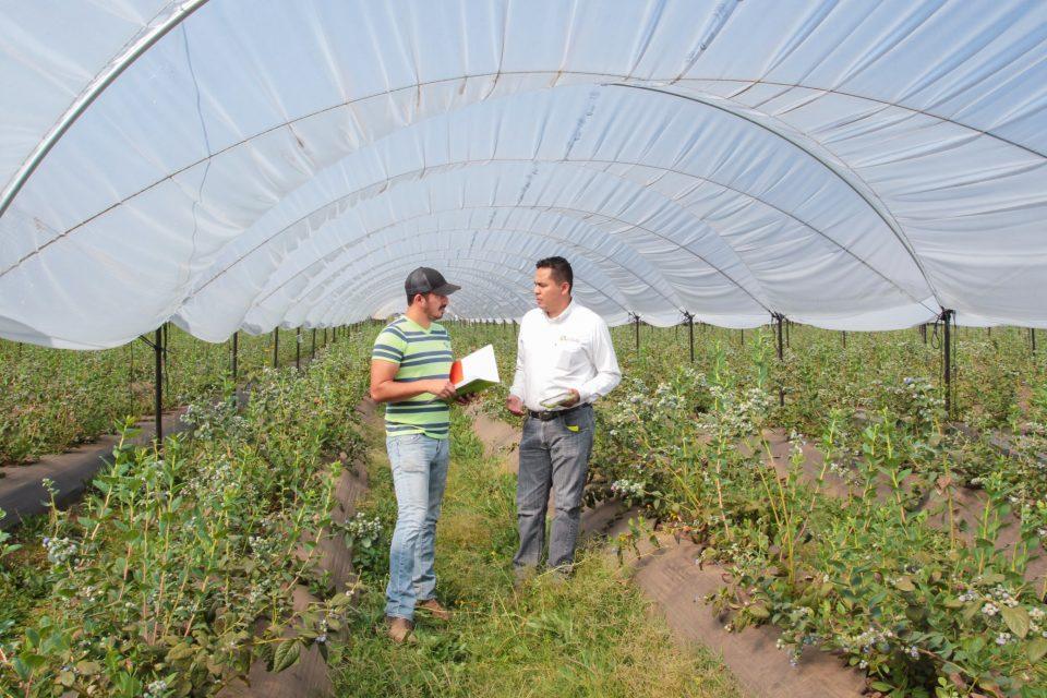 Claves para iniciar un negocio agrícola