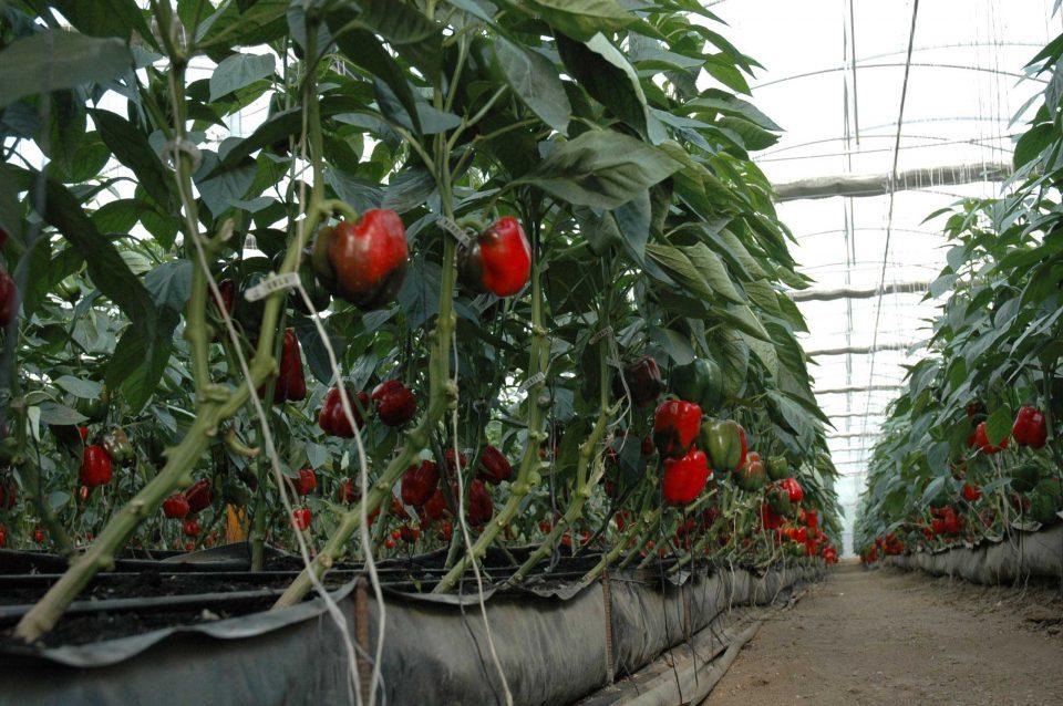 Productos que brinda la agricultura protegida