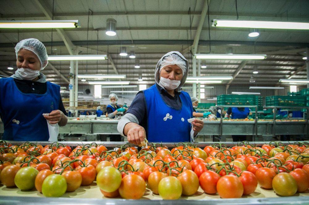 Sector agrícola un impulso económico