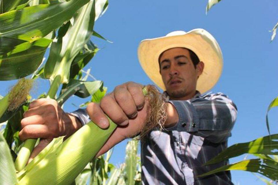 ¿Apoyo para semillas, fertilizantes…?