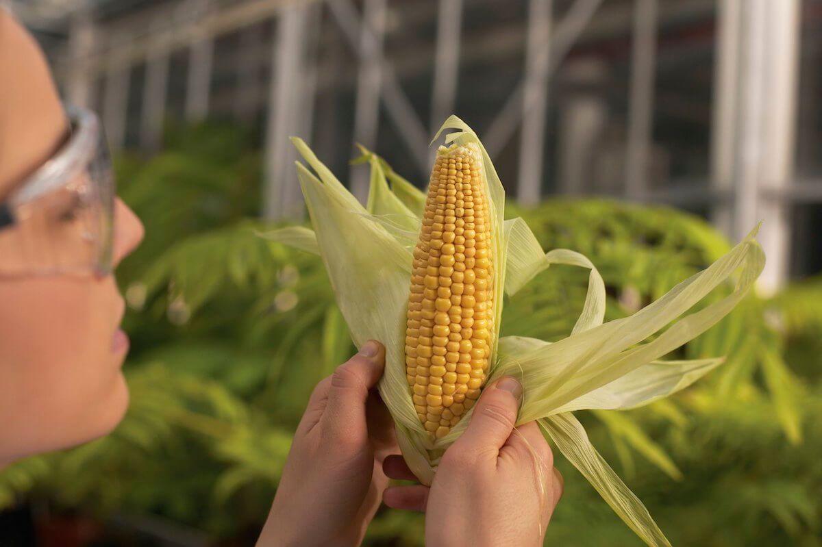 Los cultivos transgénicos y la duda científica