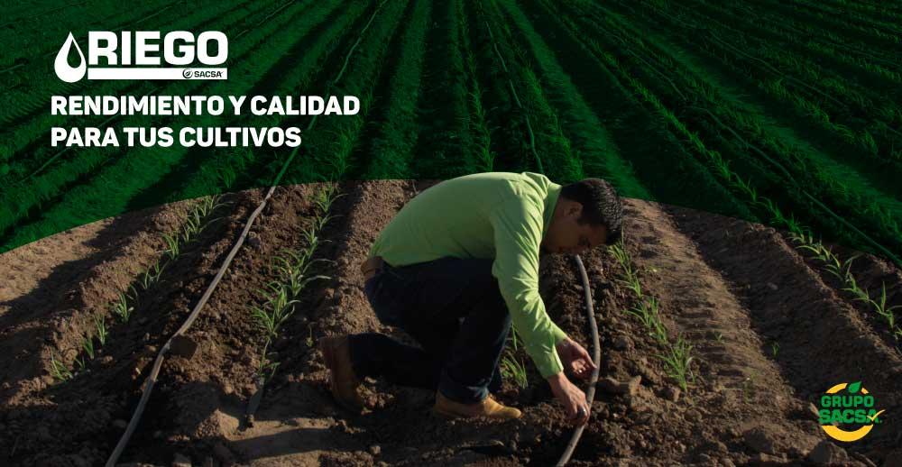 Rendimiento y calidad para tus cultivos