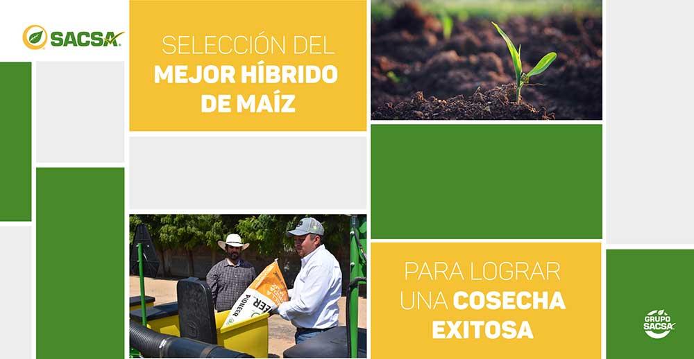 Selección del mejor híbrido de maíz para lograr una cosecha exitosa